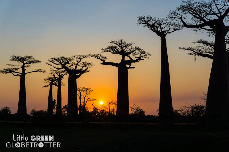 Avenue-of-Baobabs-Madagascar