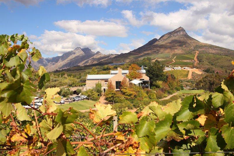 Stellenbosch wine estates Tokara